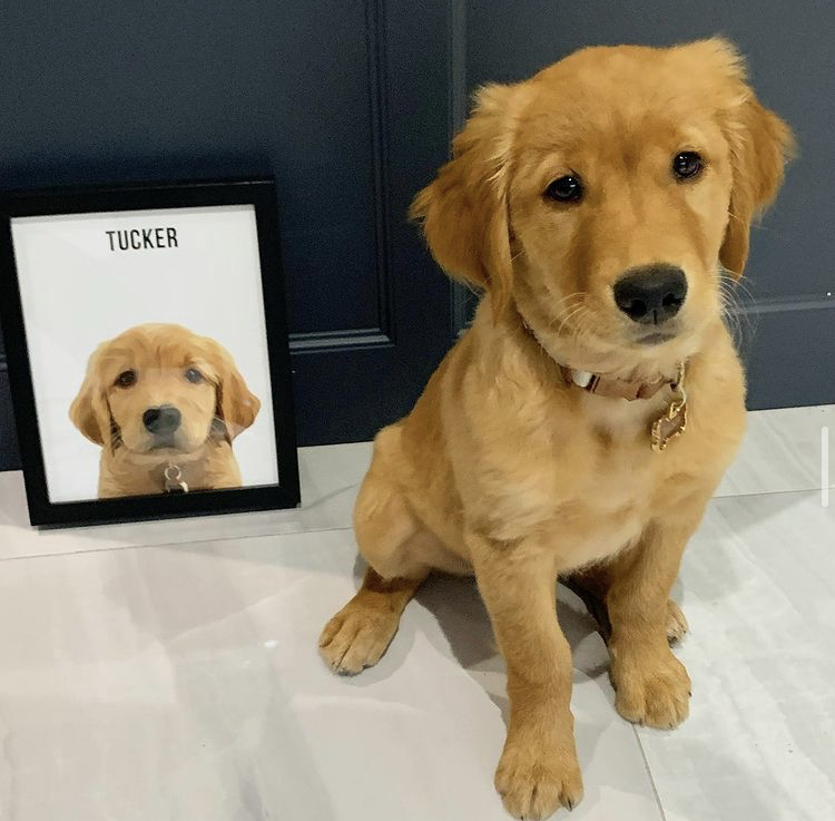 puppy beside a digital print of themselves