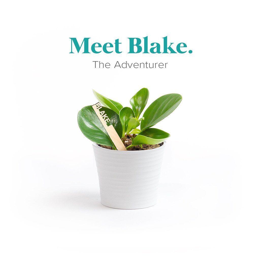 Blake The Adventurer Plantsie