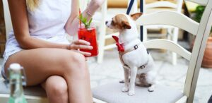 A photo of a dog on a chair on a patio with a girl drinking a red cocktail. Dog Friendly Patios in Vancouver and the surrounding areas.