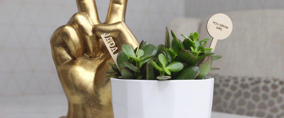 Plantsie